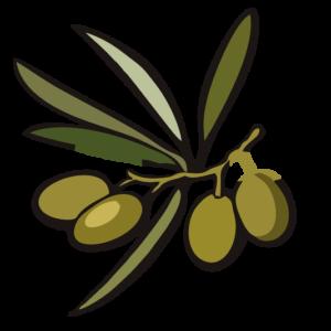 ramo de olivo olivar de dios 1